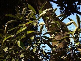 森林,鳥,木,屋外,森,緑,葉,Instagram,樹木,リラックス,セミ,リフレッシュ,草木,支店