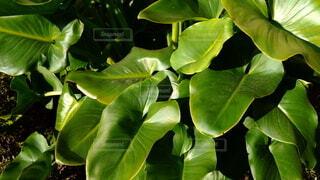 森林,鳥,木,屋外,森,緑,植物,葉,Instagram,景色,樹木,リラックス,たくさん,日陰,リフレッシュ,草木,支店