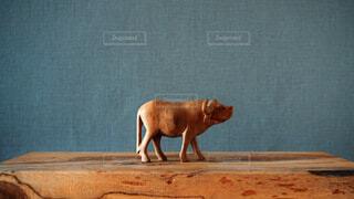 水牛の写真・画像素材[4145710]