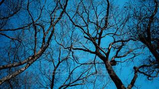 自然,風景,空,春,森林,屋外,葉,樹木,草木,小枝,オーク,支店