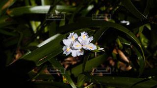花,植物,花束,フラワー,アート,ライフスタイル