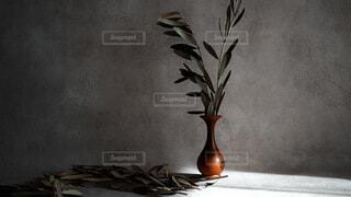 花,屋内,花瓶,フラワー,アート,植木鉢,壁,観葉植物,オリーブ,ライフスタイル,草木