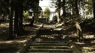 屋外,階段,樹木,地面,草木