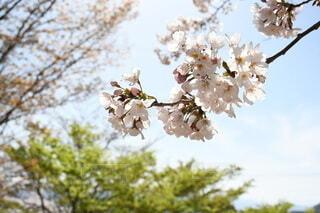 木からぶら下がっている花の写真・画像素材[4252062]