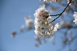花のクローズアップの写真・画像素材[4252066]