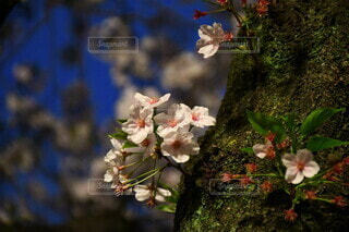 花のクローズアップの写真・画像素材[4306198]