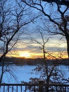 自然,空,夜,屋外,夕暮れ,樹木
