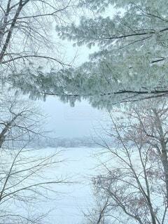 自然,雪,屋外