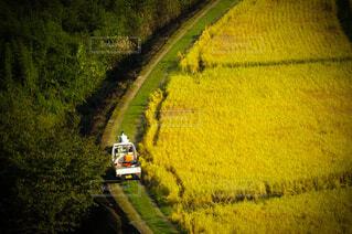 風景,ジュース,黄色,水面,景色,草,道,新緑,旅行,トラック,焚き火,寺,草木,山腹