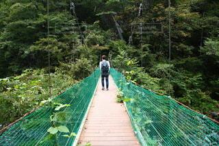 建物,橋,木,屋外,緑,一人,男,樹木,人,旅行,旅,探検,草木,フォトジェニック,男の人,天蓋歩道