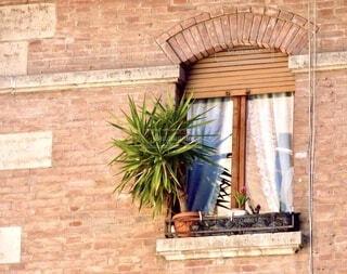 建物,屋外,海外,植物,茶色,窓,葉,ヨーロッパ,レンガ,家,背景,植木鉢,壁,窓辺,旅行,旅,煉瓦,観葉植物,イタリア,石,茶,草木,フォトジェニック