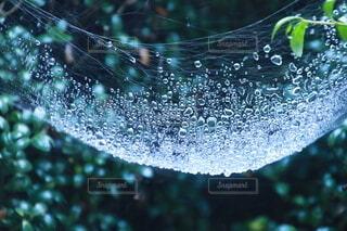くもの巣の写真・画像素材[4082199]
