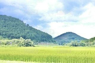 自然,風景,空,屋外,緑,草原,雲,田舎,山,景色,草,樹木,新緑,田んぼ,田園,稲,米,田畑,草木,日中