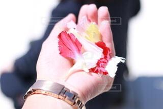 花,アクセサリー,カラフル,バラ,時計,花びら,指,手のひら,薔薇,人物,人,花弁,掌,手の平,てのひら