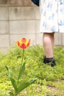 女性,花,春,屋外,一輪,チューリップ,草,スカート,人物,人,草木