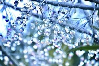 ガラス,キラキラ,箱根,景観,ガラスの森,きらきら