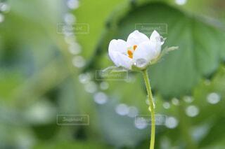 雨粒と花の写真・画像素材[4311733]