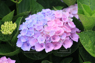 2色のの写真・画像素材[4556043]