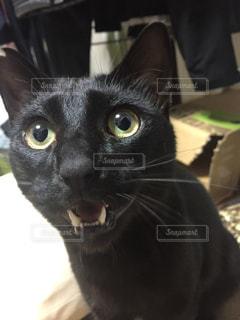 猫 - No.284533