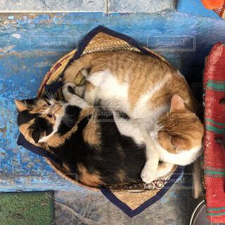 猫,動物,仲良し,ペット,癒し,旅行,ネコ科,ネコ