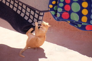 猫,動物,ペット,癒し,旅行,ネコ科