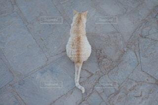 猫,動物,背中,旅行,猫背