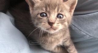 猫,動物,かわいい,ペット,子猫,目,見つめる,ネコ科