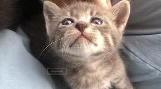 猫,動物,かわいい,子猫,ネコ科