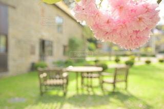 桜越しのテーブルと椅子の写真・画像素材[4286214]