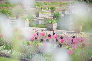 花のクローズアップの写真・画像素材[4385442]