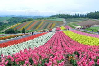 花畑を走る列車の写真・画像素材[4385445]