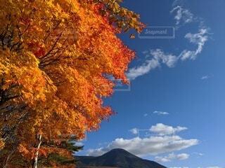 快晴と鮮やかな紅葉の写真・画像素材[4120261]