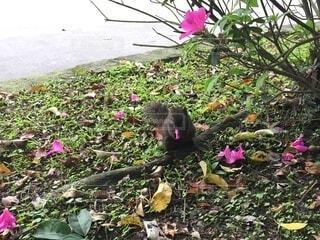 公園,花,屋外,リス,台湾