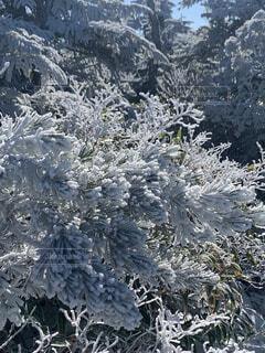 自然,冬,雪,屋外,山,霜,冷たい