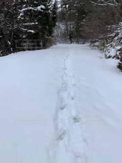 自然,冬,雪,運動,斜面,ウィンタースポーツ