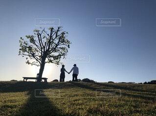 草原,景色,シルエット,樹木,淡路島