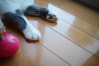 猫,ねこ,肉球,癒し,灰色,ブチ,猫の手,ネコ,猫の手も借りたい,両手,可愛い猫,可愛い手,猫の肉球