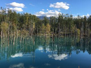 自然,風景,空,緑,雲,水,水面,池,北海道,青い池,美瑛