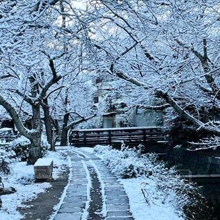 雪に覆われた哲学の道の写真・画像素材[4138561]