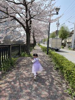 風景,空,花,屋外,少女,ドレス,樹木,地面,幼児,履物