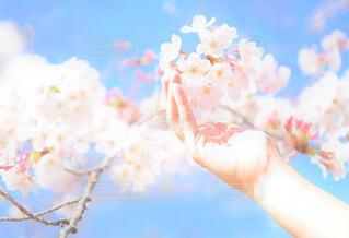 桜の季節の写真・画像素材[4095077]