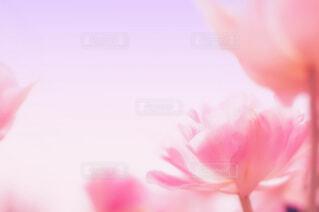 空に向かってさくピンクの花の写真・画像素材[4248876]