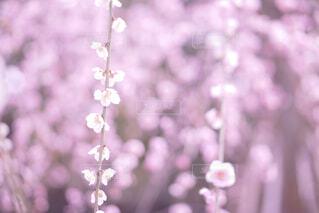 美しいお花の写真・画像素材[4248880]