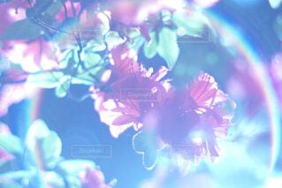 フレアの入ったお花の写真・画像素材[4249005]