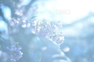 光と花の写真・画像素材[4415087]