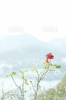 花のクローズアップの写真・画像素材[4123992]