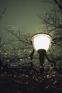 雨上がりに街灯のひかりで煌めく水滴の写真・画像素材[4097009]