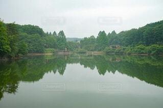 木々に囲まれた湖の写真・画像素材[4097089]