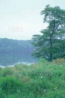 霧がかった湖とまわりの草花の写真・画像素材[4097090]