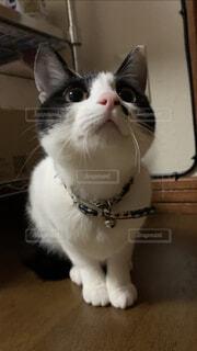 狙いを定めるネコの写真・画像素材[4089427]